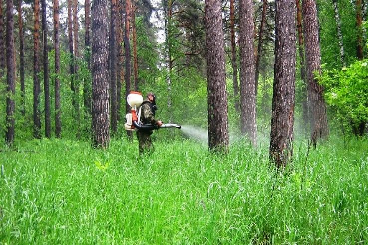 Обработка от клещей лесных массивов в Перми